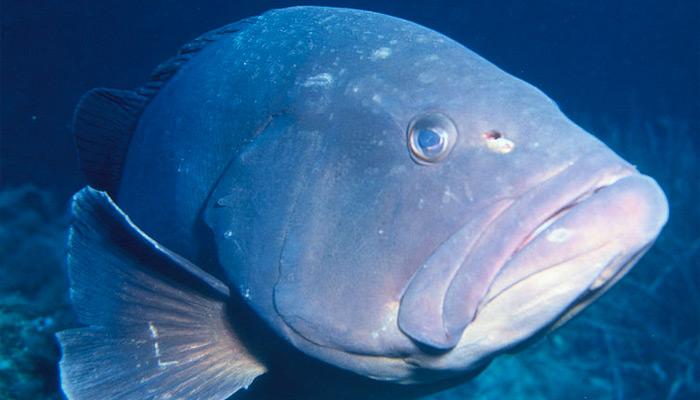 Tapie et Le Monde : poisson d'avril !