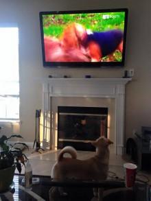 DogTV : on n'arrête pas le progrès !