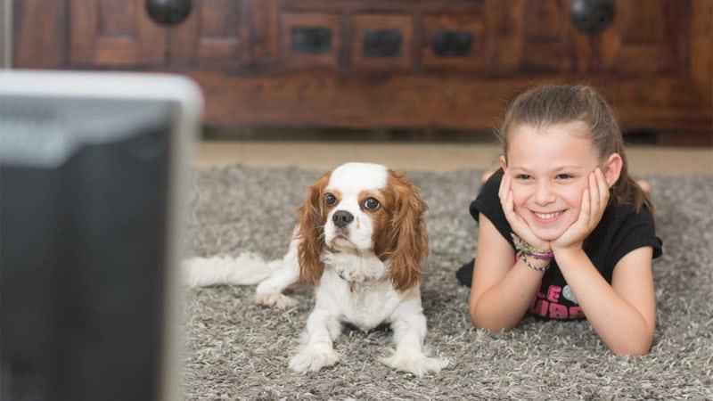 La première chaîne TV pour chiens débarque en France