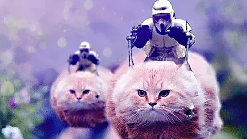 Coup de filet antiterroriste en Belgique : l'info remplacée par des images de chats
