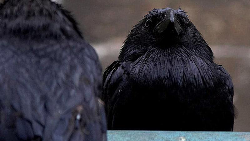 Les Corbeaux font de la résistance : les médias face au FN en campagne