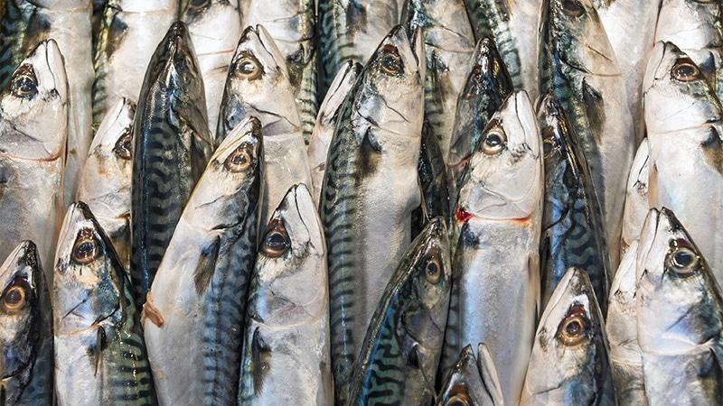 Pêcheurs normands et poissons en ligne